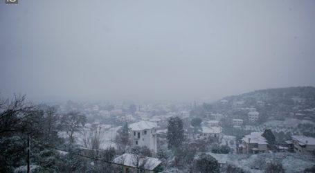 Το χιόνι σκέπασε τα Λεχώνια – Δείτε εικόνες