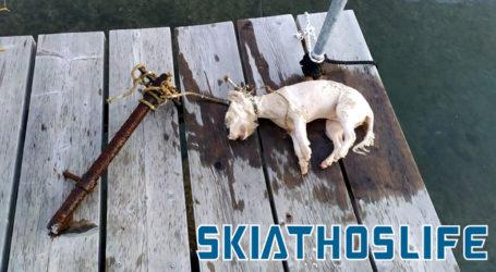 Φρίκη στη Σκιάθο: Έδεσαν σκυλάκι σε σωλήνα και το έπνιξαν στη θάλασσα