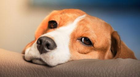 Nέο περιστατικό: Δηλητηριάσαν σκύλο στην Σκιάθο – Υποβλήθηκε μήνυση