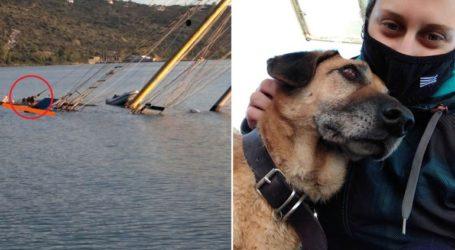 Συγκίνηση για τον σκύλο που σώθηκε από το βυθισμένο ιστιοφόρο