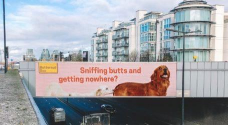 Αδέσποτος σκύλος από τη Λέσβο γίνεται …μοντέλο στο Λονδίνο