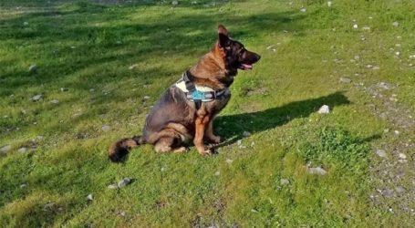 Έγκλημα στο Τυμπάκι: Ασυνείδητος δηλητηρίασε 25 σκύλους