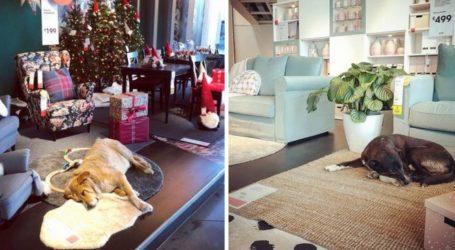 Το ΙΚΕΑ άνοιξε τις πόρτες του στα άστεγα ζώα για να τους βοηθήσει να επιβιώσουν από τον σκληρό χειμώνα