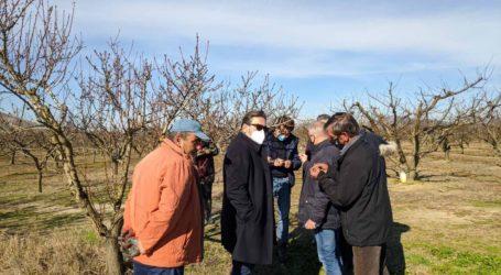 Παγετός: Αυτοψία σε δενδρώδεις καλλιέργειες στο δήμο Τεμπών (φωτό)