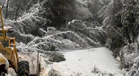 Πέφτουν δέντρα στο Πήλιο από το χιόνι – Διακοπή κυκλοφορίας ζητά ο Μιτζικός