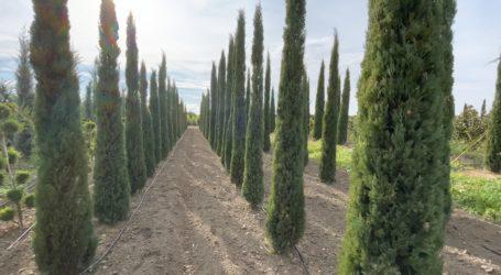 Πήλιο: Προκαταρκτική εξέταση για την κοπή δέντρων