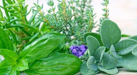 Εκπαιδευτικό πρόγραμμα για αρωματικά και φαρμακευτικά φυτά από το Π.Θ.
