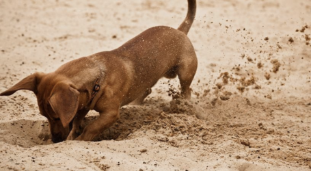 Ο σκύλος μου σκάβει την αυλή: Πως να τον σταματήσω;