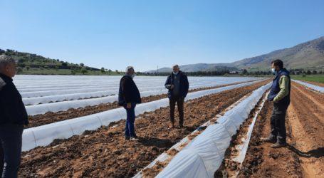 Επίσπευση των εκτιμήσεων των καλλιεργειών που επλήγησαν από παγετό στο Δήμο Τεμπών ζητάει ο Μανώλης