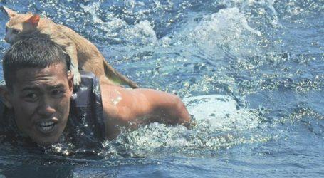 Το Πολεμικό Ναυτικό διέσωσε γάτες από βυθιζόμενο πλοίο