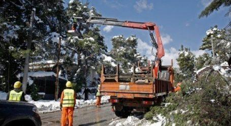 Η «Μήδεια» άφησε πίσω της 255 τόνους κλαδεμάτων στον Δήμο Χαλανδρίου