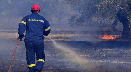 Υπό έλεγχο η δασική πυρκαγιά στον Κάλαμο Ωρωπού