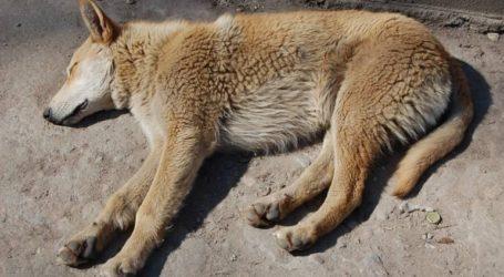 """Αστυνομικοί έσωσαν αδέσποτο σκυλάκι που """"σφάδαζε"""" στη μέση του δρόμου"""