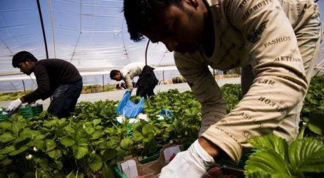 Πρόκληση μετακλητών εργατών γης από τρίτες χώρες