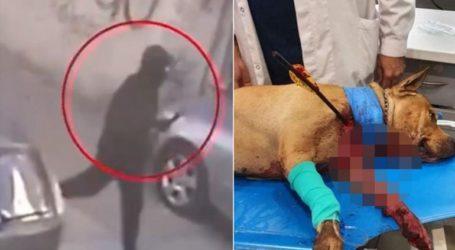 Χειροπέδες στον «τοξοβόλο» που σκότωσε σκύλο σε αυλή σπιτιού στην Πετρούπολη
