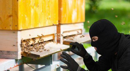Εξιχνιάστηκαν περιπτώσεις κλοπών κυψελών με τα σμήνη μελισσών τους στη Σκιάθο