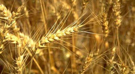 Περιφέρεια Θεσσαλίας: Ενημέρωση για μυκητολογικές ασθένειες σιτηρών