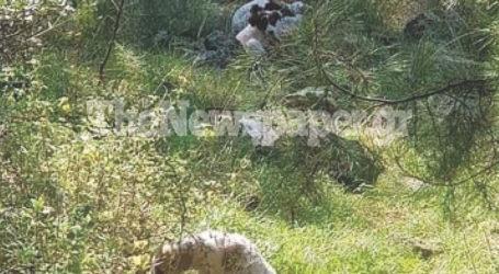 Βόλος: Εγκατέλειψαν κουτάβια στον λόφο της Γορίτσας [εικόνα]