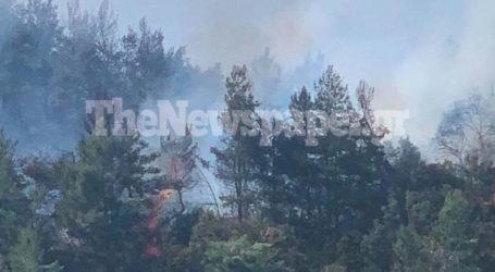 Καίγεται πευκόδασος στο Βρωμονέρι Πηλίου – Δείτε εικόνες