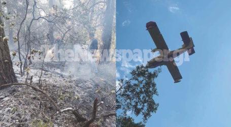 Πήλιο: Στάχτη 100 στρέμματα δάσους – Συνεχίζονται οι εναέριες ρίψεις [νέες εικόνες]