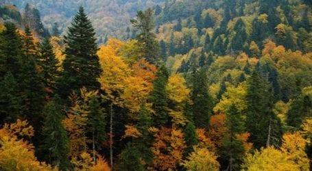 Εκτάσεις με φρύγανα και ασπάλαθους δεν χαρακτηρίζονται δάση
