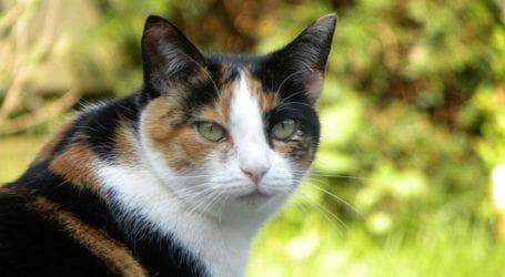 «Συνελήφθη» γάτος-βαποράκι έξω από φυλακή
