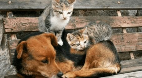 Προς συνεπιμέλεια των ζώων σε περίπτωση διαζυγίου