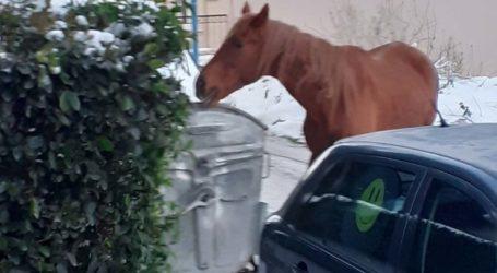 Δείτε φωτογραφίες: Αυτός είναι ο δρόμος της Λάρισας στον οποίο… βολτάρουν ανενόχλητα άλογα!