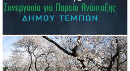Δήμος Τεμπών: Προτάσεις της παράταξης «Συνεργασία Για Πορεία Ανάπτυξης» σχετικά με τον παγετό που προκάλεσε καταστροφές στην περιοχή