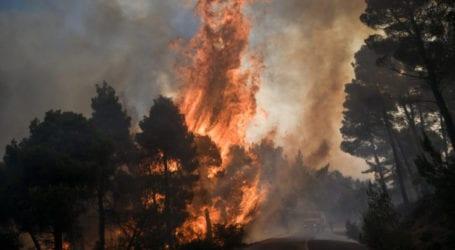 Λάρισα: Έβαλε φωτιά στο δάσος από αμέλεια και τον συνέλαβαν