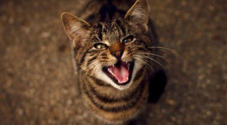 Νιαούρισμα γάτας: Οι λόγοι & τι πρέπει να αποφύγουμε!