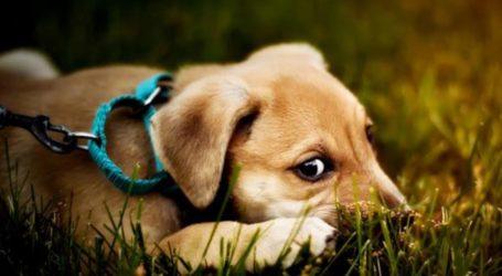 Ψυχολογία σκύλου: Πως να γνωρίσετε τον σκύλο σας!