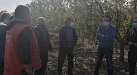 Κόκκαλης από Συκούριο: Οι αμυγδαλοπαραγωγοί μετρούν σωρευμένες ζημιές ετών, δε φθάνουν τα περυσινά ψίχουλα με το «80αρι»