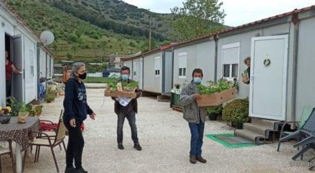 Διάθεση παραδοσιακών φυτών στους σεισμόπληκτους του Μεσοχωρίου και του Δαμασίου από τους Οικολόγους ΠΡΑΣΙΝΟΥΣ Ν. Λάρισας.