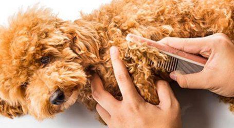 Τι πρέπει να γνωρίζετε για το τρίχωμα του σκύλου σας!