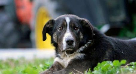 Φρίκη στον Αλμυρό: Δηλητηρίασαν τέσσερα σκυλιά