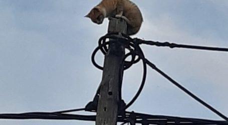 Βόλος: Γάτα σκαρφάλωσε σε στύλο της ΔΕΗ και την κατέβασαν… πυροσβέστες