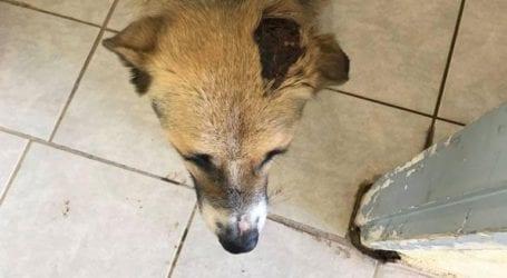 Κατηγορείται διοικητής Μοίρας στη μονάδα της Ριτσώνας για πυροβολισμό εναντίον σκύλου!