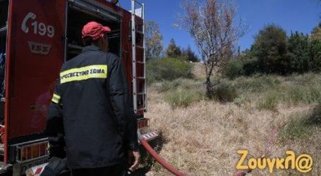 Υπό έλεγχο η πυρκαγιά στην Αργυρούπολη
