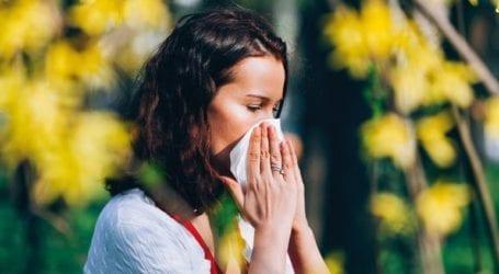 Υπεύθυνες για εμφάνιση άσθματος και αλλεργικής ρινίτιδας οι κατσαρίδες