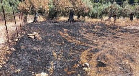 Το «σημείο μηδέν» της καταστροφικής πυρκαγιάς στον Σχίνο Κορινθίας