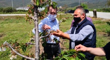 Κόκκαλης από Αγιά: Χαριστική βολή για τους αγρότες ο παγετός, «όχι» στην εξαφάνιση του μικροπωλητή λαϊκών αγορών