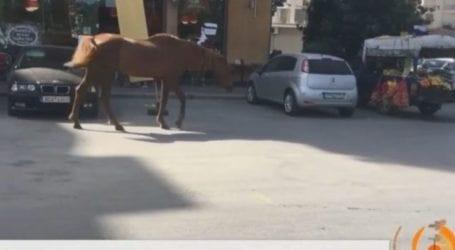 Άλογο βγήκε… παγανιά στη Λάρισα και προκάλεσε αναστάτωση – Δείτε το βίντεο
