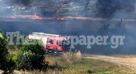 ΤΩΡΑ: Φωτιά δίπλα στο Σέσκλο – Δείτε εικόνες και βίντεο