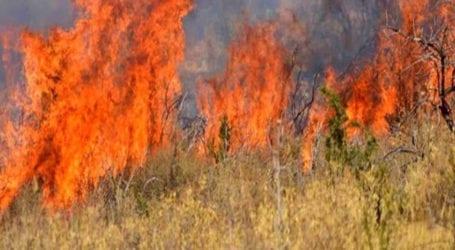 Θεσσαλονίκη: Σύστημα έγκαιρου εντοπισμού πυρκαγιάς από φοιτητική ομάδα- Πώς λειτουργεί