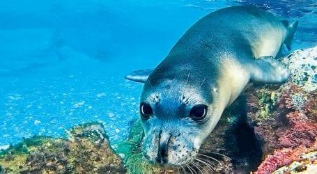 Στο Νοσοκομείο Βόλου εκάκτως 50χρονη τουρίστρια – Τη δάγκωσε φώκια στην Αλόννησο