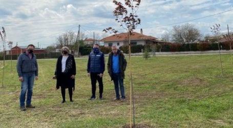 Δήμος Κιλελέρ: Νέο πάρκο δεντροφυτεύτηκε στο Μελισσοχώρι