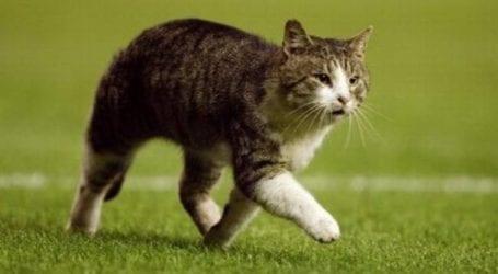 Βόλος: Πέταξε γάτα στα σκουπίδια αφού τη σκότωσω – Καλείται να πληρώσει 30.000 ευρώ πρόστιμο!