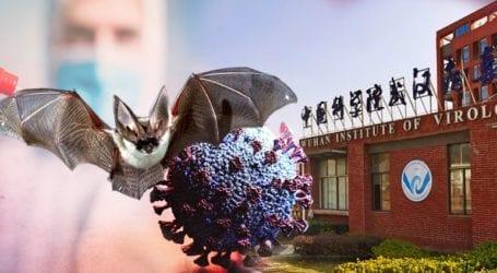 Αποκαλυπτικό βίντεο με νυχτερίδες σε κινεζικό εργαστήριο