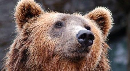 Αρκούδα σκότωσε άνθρωπο στην ορεινή Σλοβακία